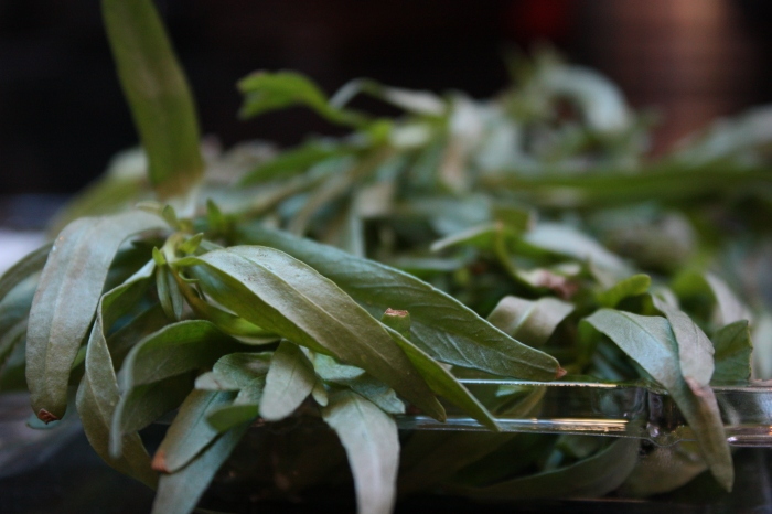 I love this picture! I know that it's just tarragon, but it looks so pretty...