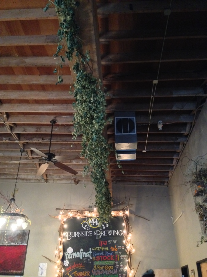 At Burnside Brewing Co. Love the hanging hops!